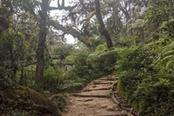 foresta per marangu gate