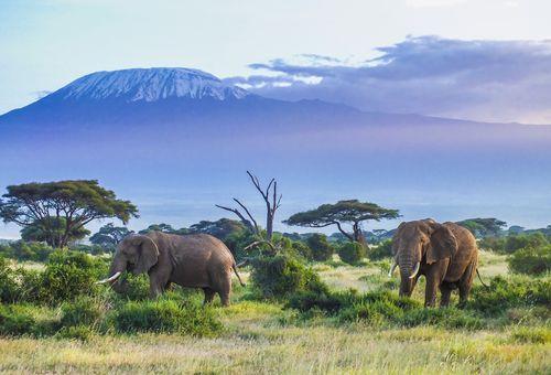 Trekking sul Kilimanjaro e Safari in Tanzania cover