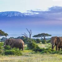 elefanti e kilimangiaro