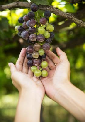 degustazione di vini a malta