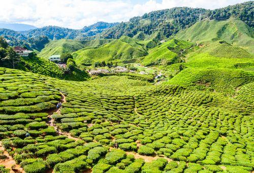 Malesia: natura e libertà in Oriente cover