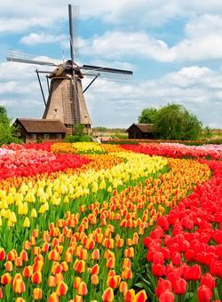 viaggi di gruppo organizzati in olanda