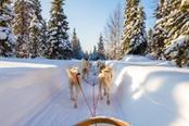 slitta trainati da cani in mezzo alla neve