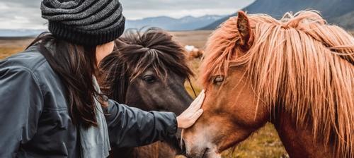 donna accarezza cavalli in montagna