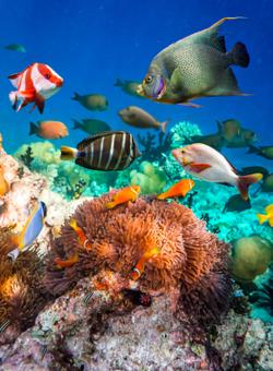 pesci nella barriera corallina alle maldive