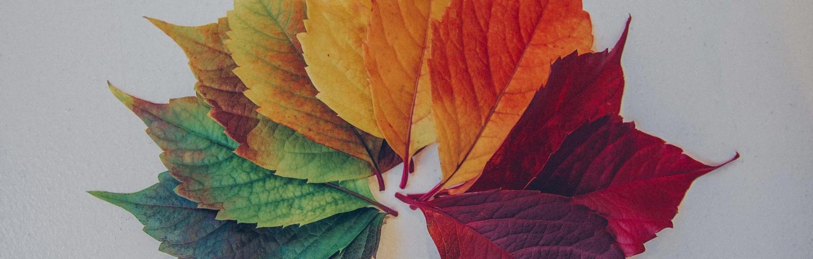 foglie con i colori di tutte le stagioni