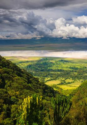 foresta del ngorongoro