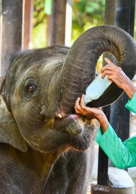 nutrire elefanti in sri lanka