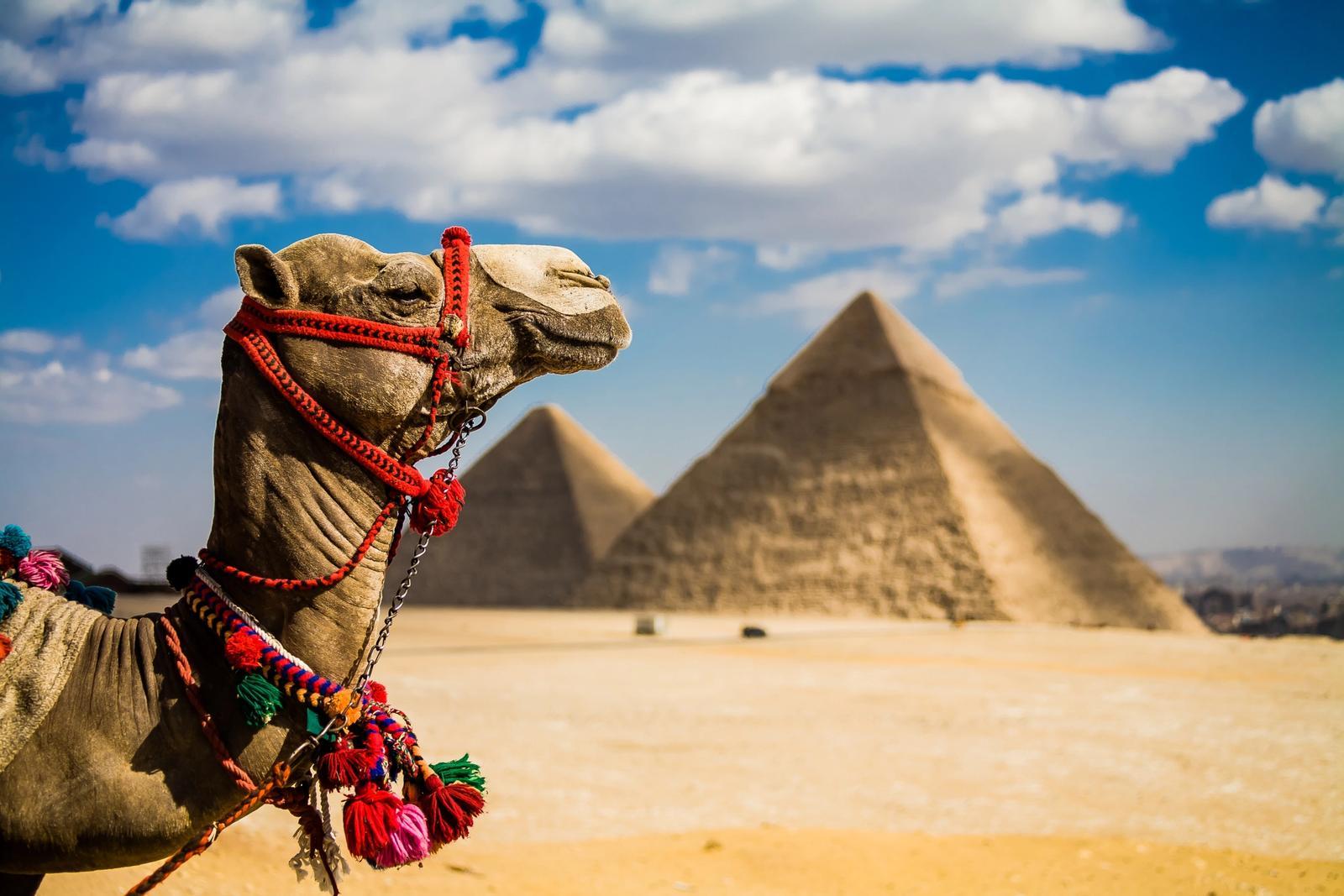cammello piramidi di giza