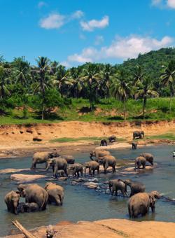visita elefanti sri lanka