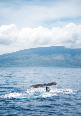 escursione balene tromso norvegia