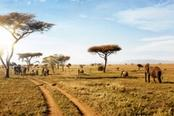 savana con animali nel serengeti