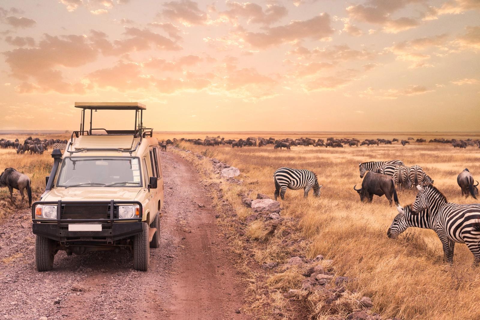 safari al tramonto in mezzo alle zebre