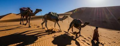 tour sui cammelli nel deserto al tramonto