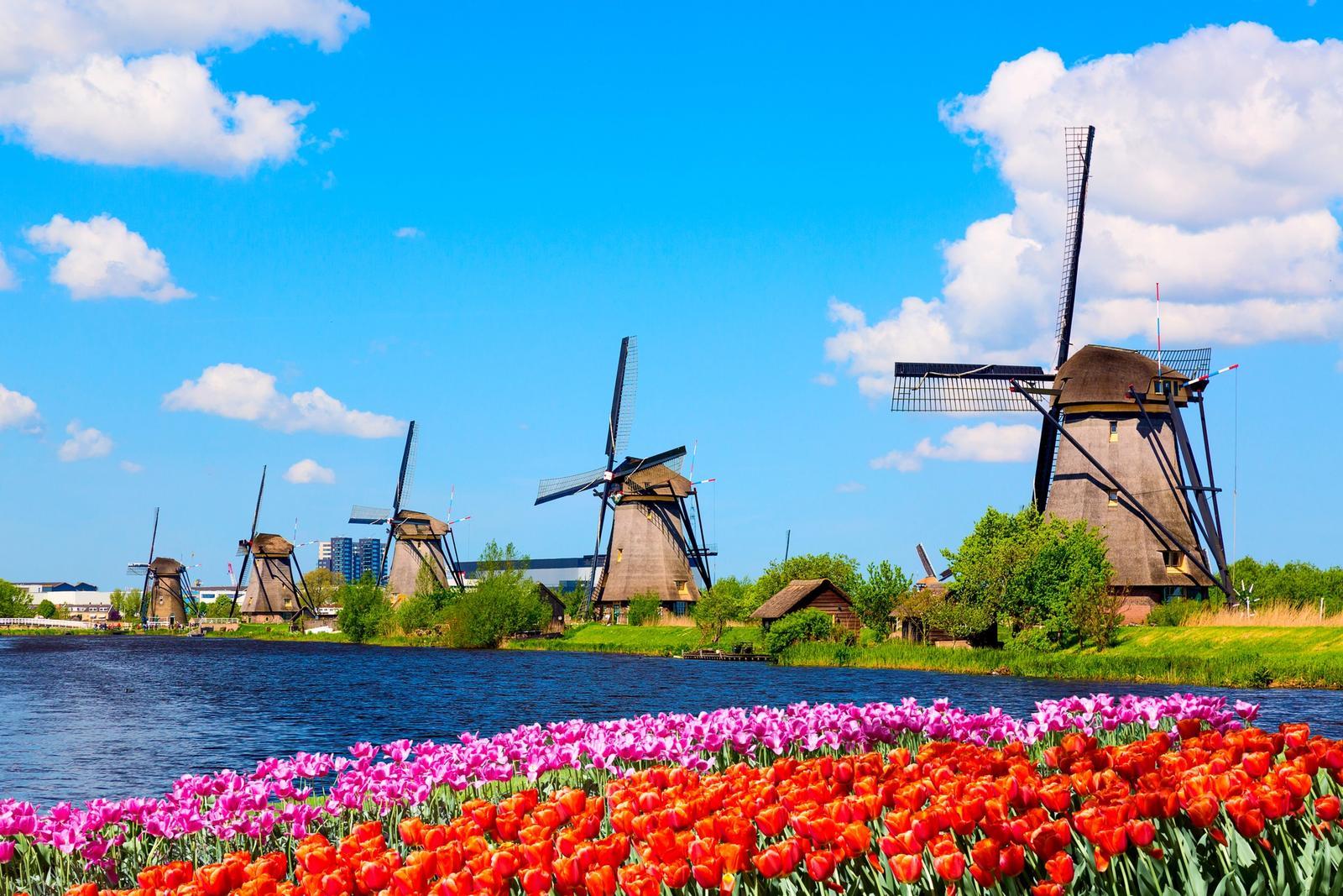 mulini a vento e campo di tulipani in olanda