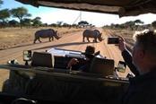 migliori tour safari in namibia