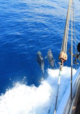 gite in barca con delfini in grecia