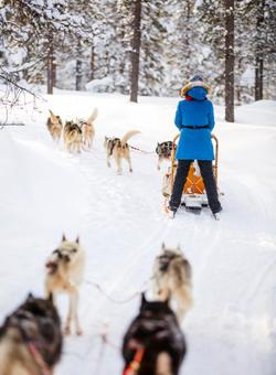 slitta trainata da cani husky sulla neve