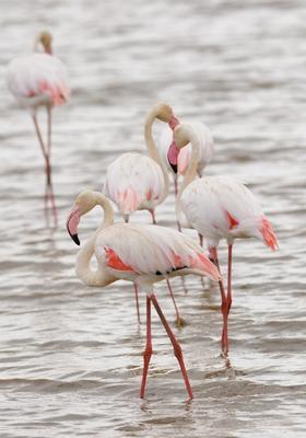 fenicotteri rosa al lake manyara national park