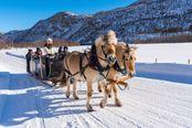 slitta trainata da cavalli sulla neve trentino