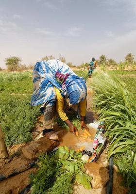 coltivazioni donne a maaden el ervane