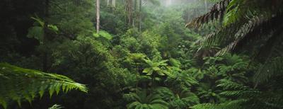 viaggi di gruppo organizzati nella giungla