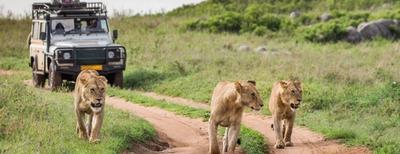 miglior safari in africa
