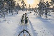 slitta trainata da cani husky nella neve in valle d'aosta