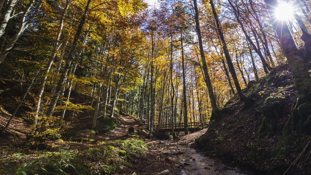 bosco del parco delle foreste casentinesi in toscana