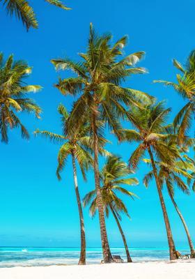 spiaggia con palme a zanzibar