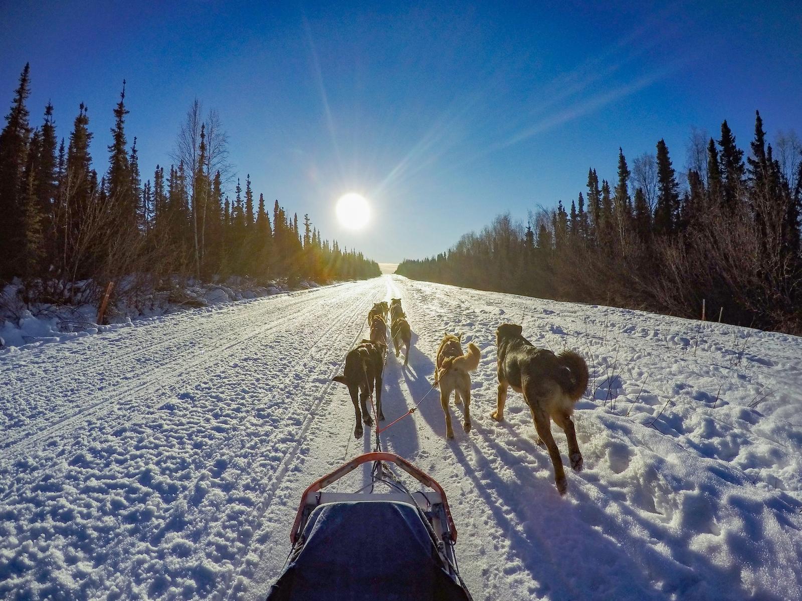 escursioni con cani da slitta