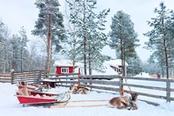slitta con renna nella neve