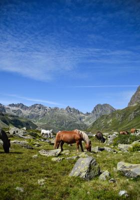 escursione a cavallo trentino
