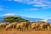 elefanti nella savana in tanzania