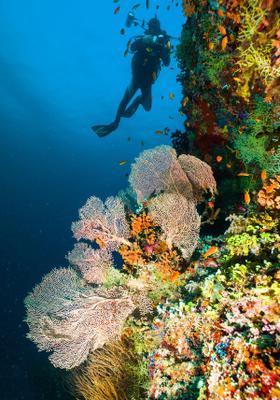snorkeling barriera corallina maldive