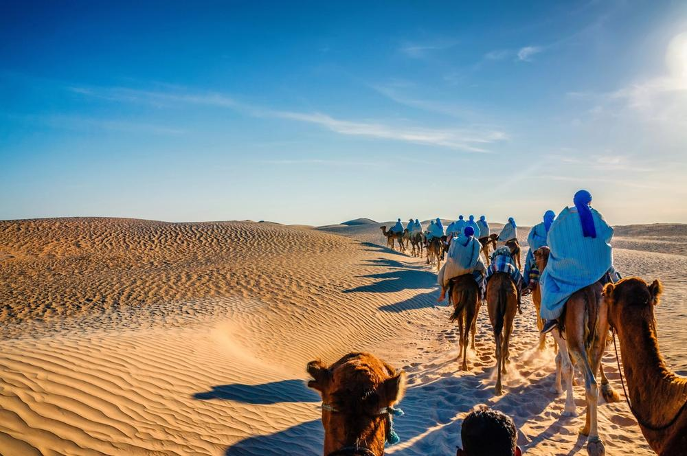 cammelli nel deserto tunisia