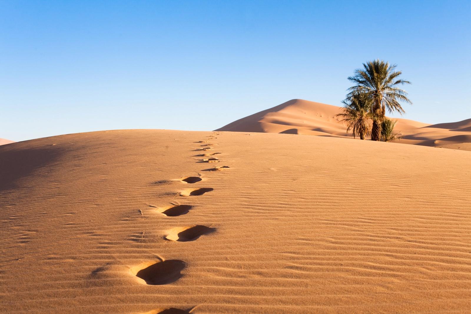 orme sul deserto in medio oriente