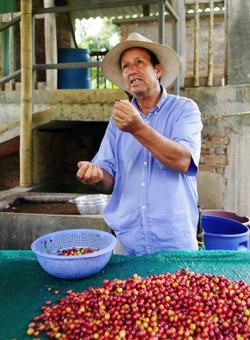 contadino colombiano spiega la raccolta del caffe