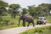 safari con elefante che attraversa la strada