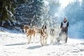 escursione in slitta con husky tromso norvegia