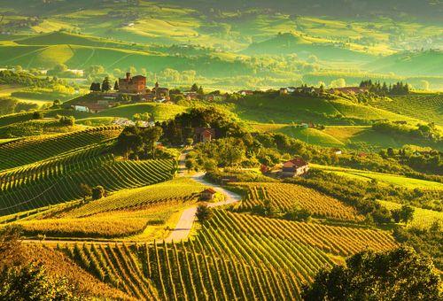 Langhe: A caccia di Vino e Tartufo cover