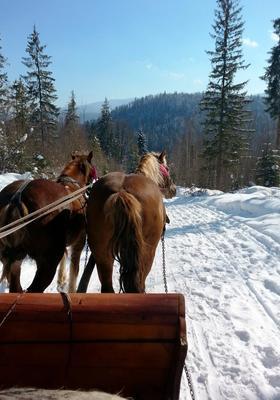 slitta trainata da cavalli trentino