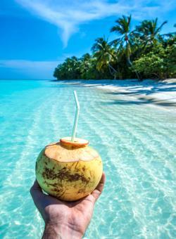 noce di cocco in riva al mare