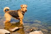 cane lago santo parmense