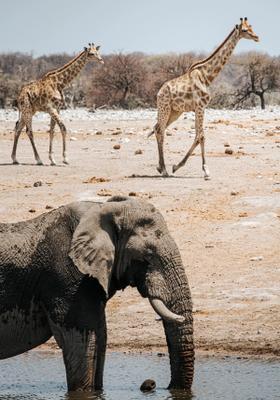 miglior tour safari in namibia