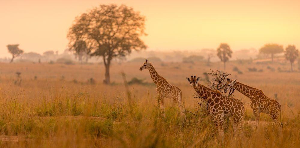 safari organizzati in africa