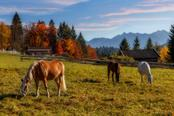 agriturismo con cavalli in val di sole
