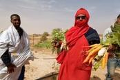 coltivazioni solidali di donne in mauritania