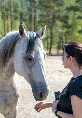 pet teraphy con cavalli in trentino alto adige
