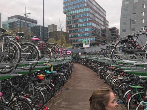bikes in rotterdam